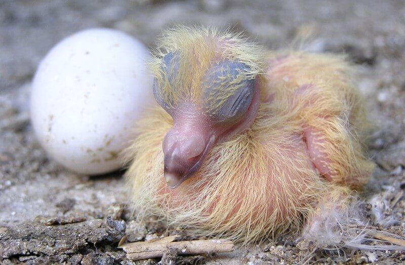 What to do if you find a baby bird | Audubon de Mexico