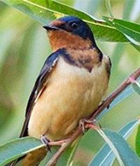 Audubon Birdwalk at Peña Blanca