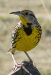 Special June 17 Audubon Birdwalk at El Charco del Ingenio