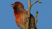 September 23: Audubon Birdwalk along the Rio Laja