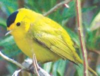 Audubon Birdwalk at Bridge over the Rio Laja